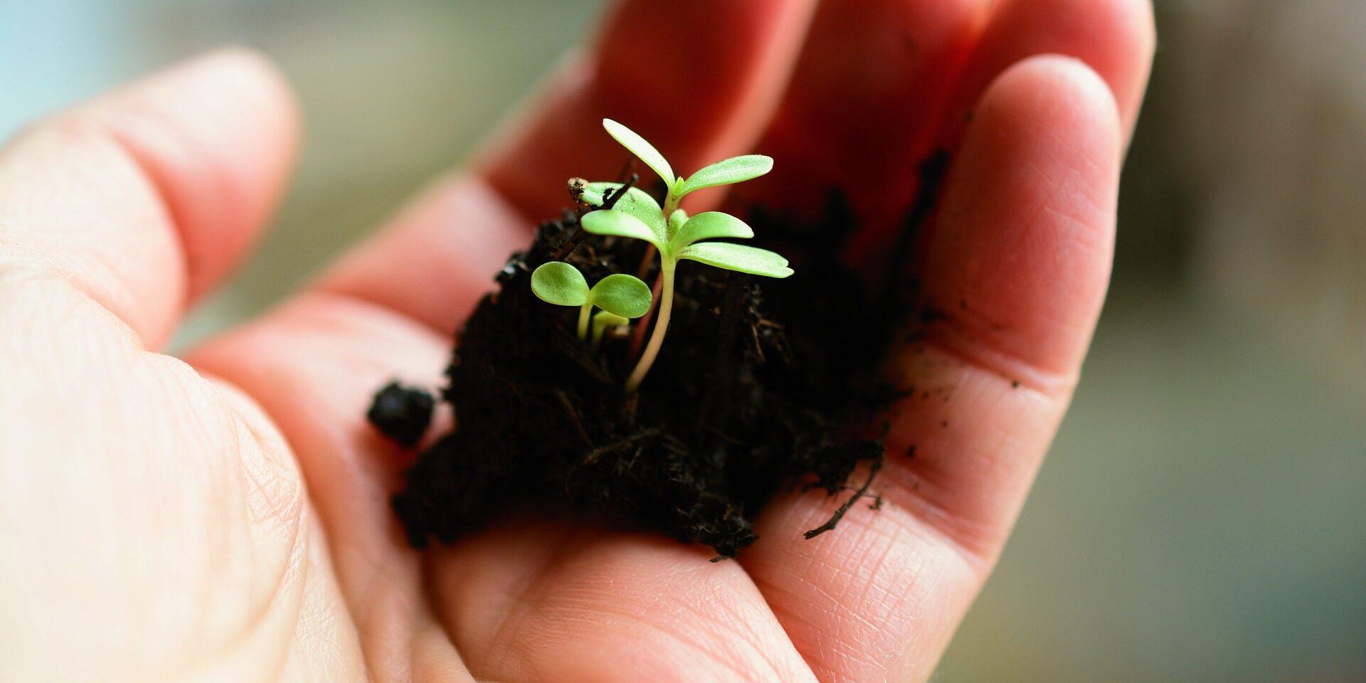 plant-4036130_1920